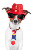 crazy-silly-funny-dog-hat-glasses-tie-27515651