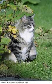 cat-on-grass