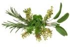 parsley sage.jpg