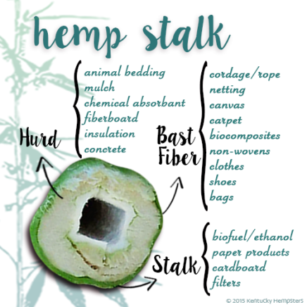 hempstalk_diagram
