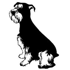 black schnauzer