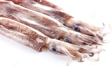 fresh-calamari.jpg