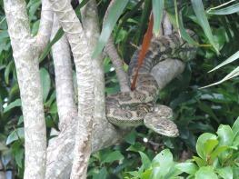 31.1.18 Our python 001
