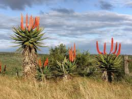 Bushveld Recalled